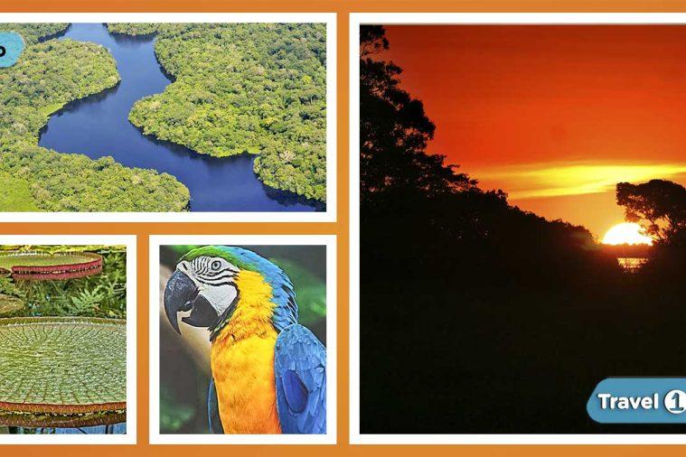 Amazon Tours Peru